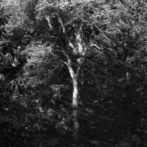 In company of trees