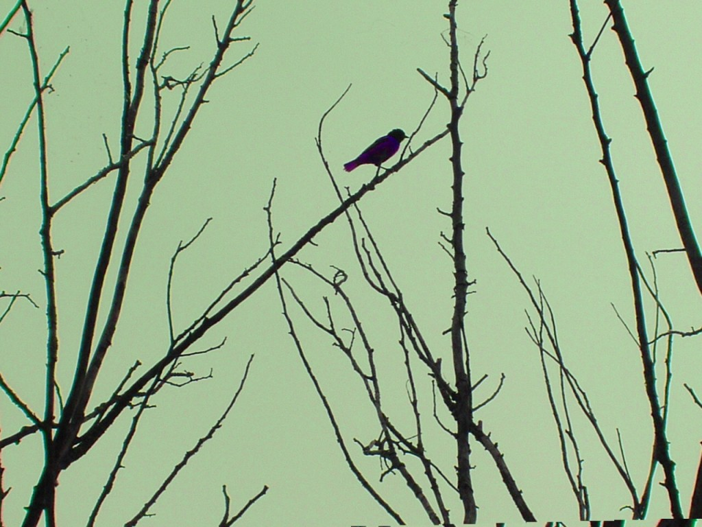 Bird on branch with pale green sky