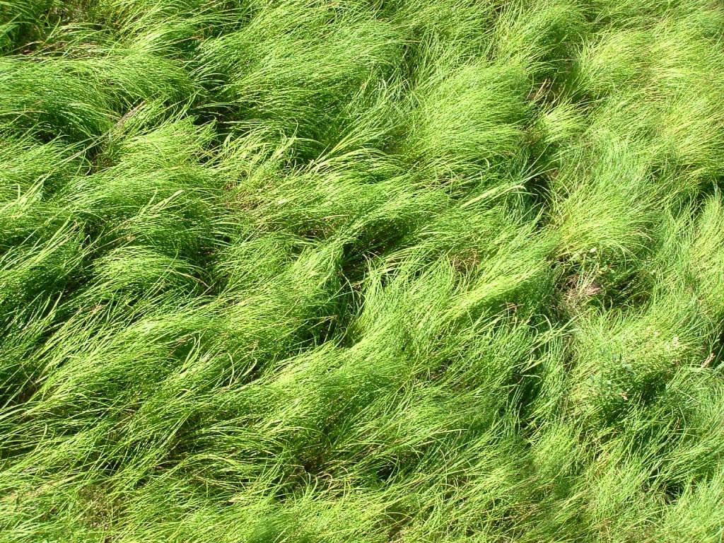 just beautiful green grass