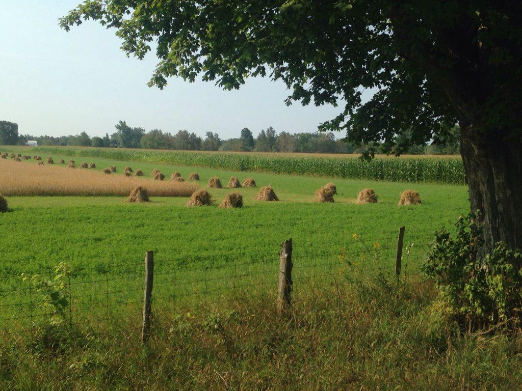 Semi harvested field with fence and tree line