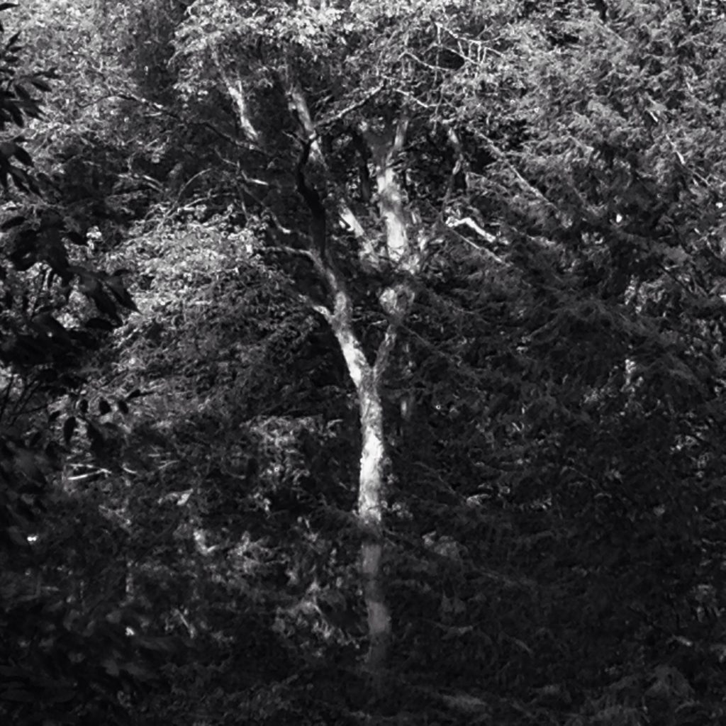 Black and white photo of a tree in the forest